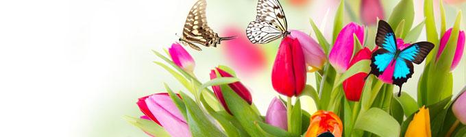 Limpieza y mantenimiento de los canalones en primavera