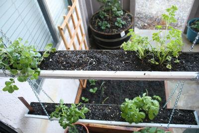hierbas aromaticas en canalones