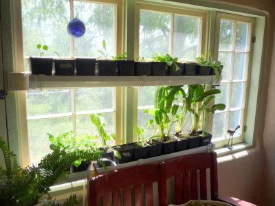 cultivo de plantas en interior en canalones