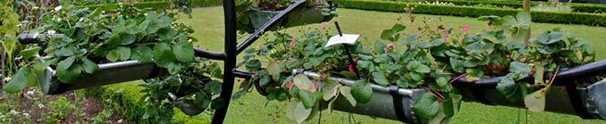 Ideas creativas para reciclar los canalones para el jardín