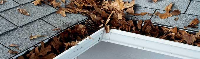 canalones con hojas de otoño y secas