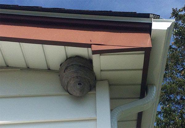 insectos crían en los canalones