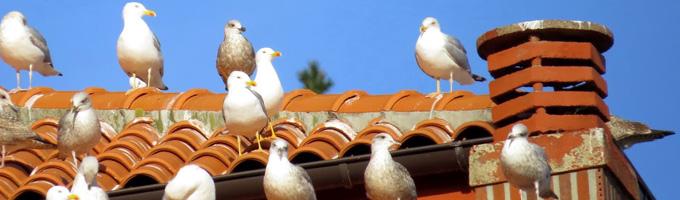 Aves tejado