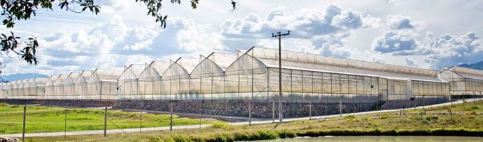 Por qué es recomendable la instalación de canalones en invernaderos