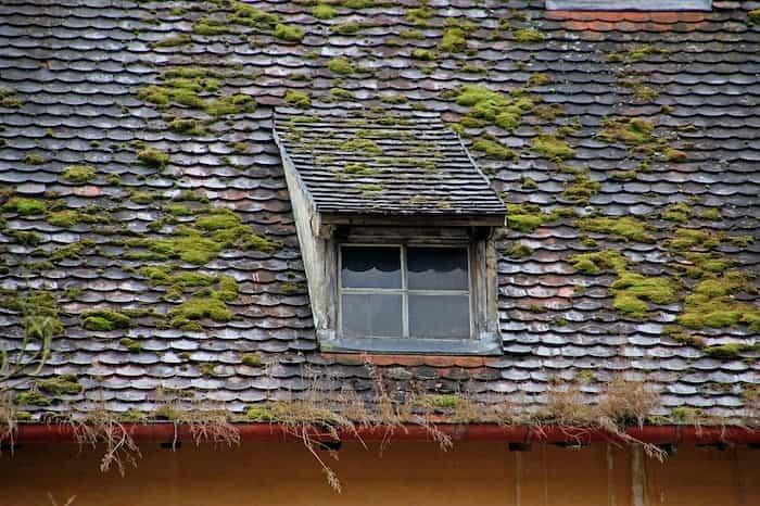 Musgo en los canalones y em el tejado