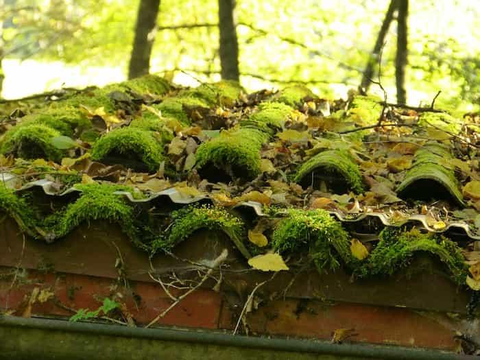 Acumulación de musgo y hojas en el sistema de canaletas pluviales