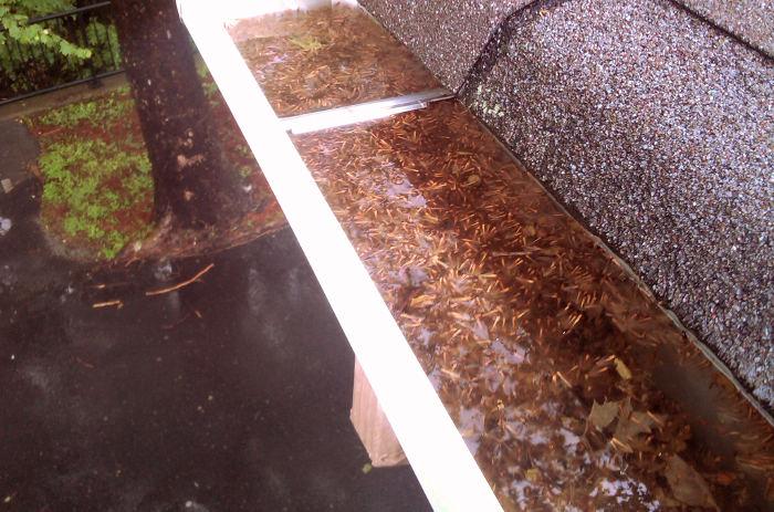 Canalón obstruido por acumulación de hojas y suciedad